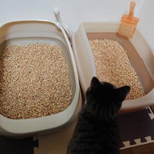 猫のために買ったものを猫が使ってくださる、それだけで狂喜乱舞。