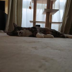 猫の生活(羨ましい)