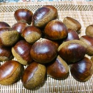 山口県からの頂き物  岸根栗と蓮根麺