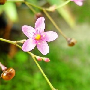 我が家の庭のお花は・・・そして今おやつは自前♪