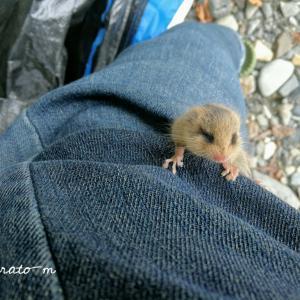 野生のリスの赤ちゃん(?)が足を登ってきた日。