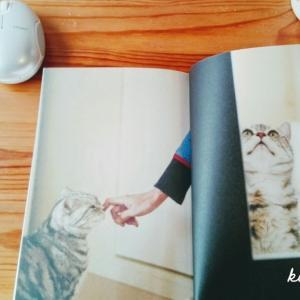角田光代さんの猫本『今日も一日 きみを見ていた』に癒されています。