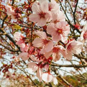 【伊勢神宮】お礼参りとお花見プチ旅行。桜が満開でそれは見事な絶景でした。