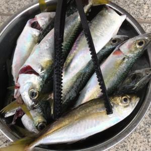 2018-11-18 アジサビキ釣り