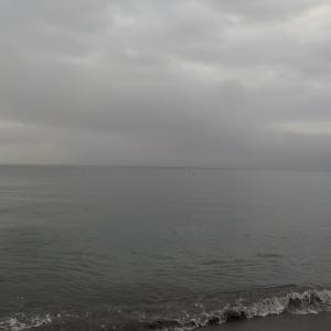 金田湾:好調!マゴチとヒラメ
