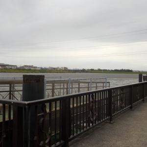 旧江戸川で梅雨夜のぶっこみ釣り