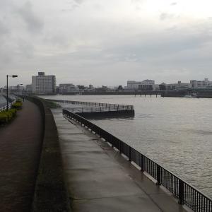 続・旧江戸川でシーバスハンターと化す