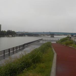 旧江戸川はシーバス祭り