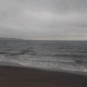 金田湾、今年のサバフグはタチが悪い・・・