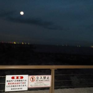 京急大津でアジ釣り