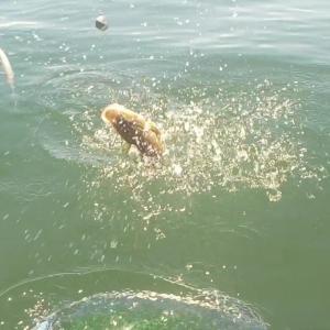 金田湾、泳がせ好調!復活への兆し。。。