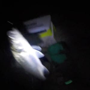 旧江戸川の夜のぶっこみ釣り