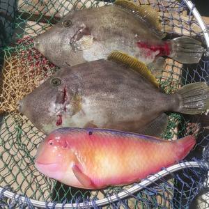 泳がせ釣りの気分転換に6月のコマセ釣りをやってみる