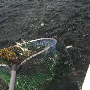 金田湾ボート釣り:イワシトルネードのちマゴチ