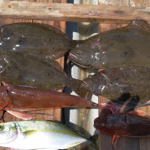 金田湾:泳がせ釣りでイワシとハゼを泳がせる