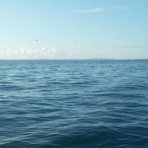 金田湾、サバフグだらけで撃沈す。。。