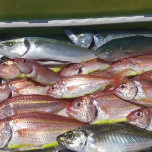 金田湾で編出した流し釣りの鯛・青物釣法を網代に持ち込む