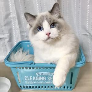 お水遊び? お手伝い?