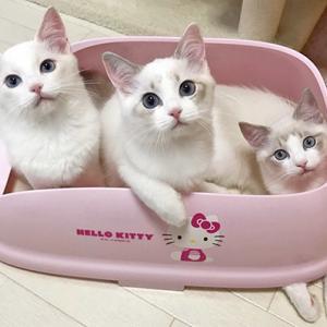 子猫ほいほい ☆