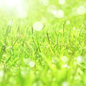 失敗したっ(>△<)!!種からの芝生の育て方