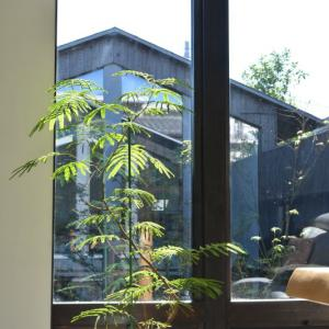 観葉植物はカーテンの代わりになるか?直射日光に強い植物5選