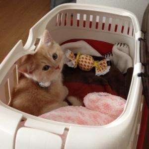 猫の日ですから〜ルーツ〜( ̄+ー ̄)
