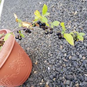 小さな庭づくり♪/雑草との向き合い方。