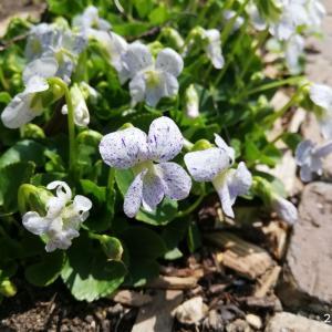 春の宿根小花♡生育記録(左花壇)/私の小さな息抜きスポット