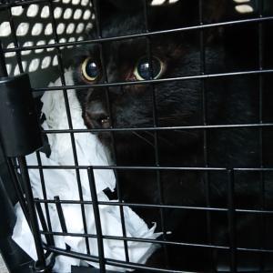 黒猫ちゃん緊急保護❤️でした…