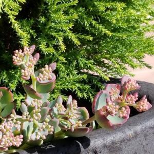 9月に植え替えた外管理の観葉植物