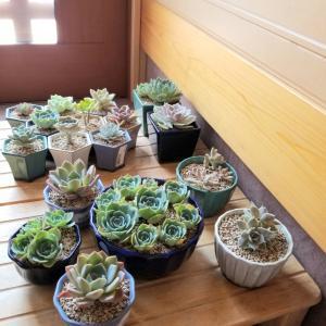 外管理観葉植物の猛暑日対策