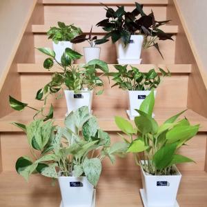 階段で観葉植物を数える