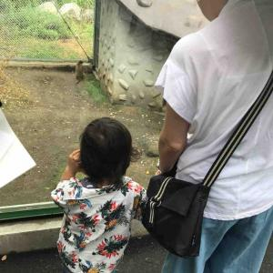 アンパンチ論争。その親がアンパンマンを見て育たなかったことを願います。