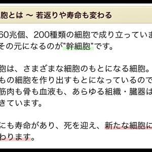 【健康である為に】幹細胞の役割\(◎o◎)/!