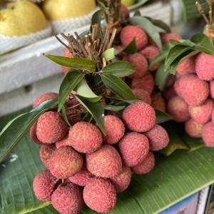 今日の果物 (2020/MAY/11) Today's Fruits