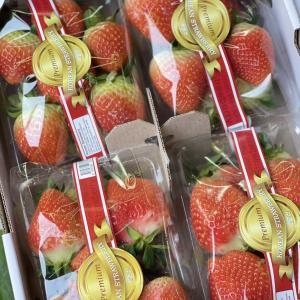 今日の果物 (2021/JAN/25) Today's Fruits
