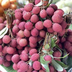 今日の果物 (2021/APR/21) Today's Fruits