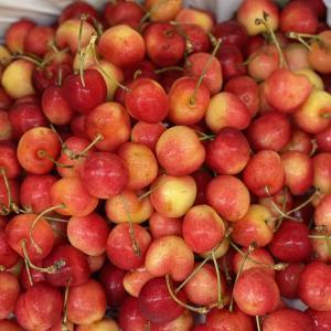 今日の果物 (2021/JUN/28) Today's Fruits