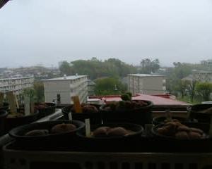 雨の日のベランダエケが綺麗で