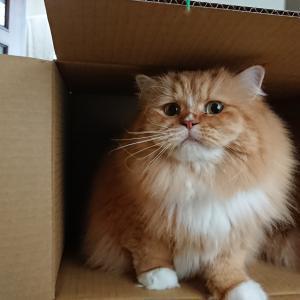 猫じゃらし買わないと