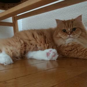 愛猫ちゃんとの絆