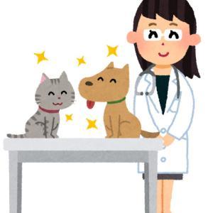 ペットと暮らすことになったらペットも保険に入っておこう