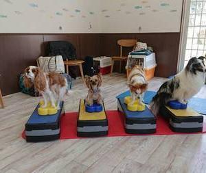 愛犬の御飯の勉強を一緒にしませんか?食べ物はとても大事です^^そして体幹トレーニング、体作りも^^お家で出来るケア、運動のセミナー・教室が開催されます!