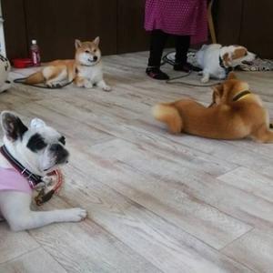 愛犬との生活に必要な、しつけと付き合い方。時間が掛かりますが、愛犬としっかりと向き合える訓練になります。アジリティと海遊びの壮行会・パピー教室も受付中です!