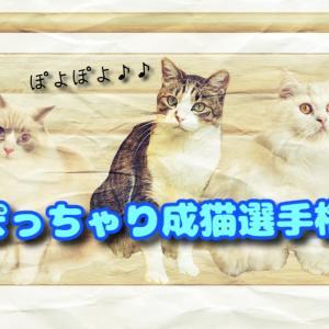 【ぽっちゃり成猫ランキング発表!!】