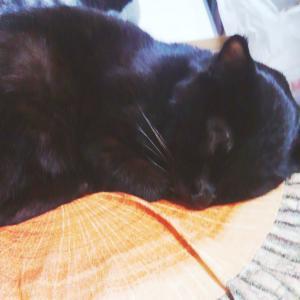 天国へ旅立った黒猫さんのお墓参りに行ってきました