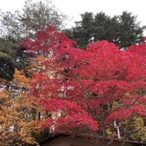 紅桜公園で紅葉🍁 とクラフトジン