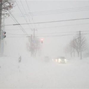 大雪だ (=゚ω゚)ノ