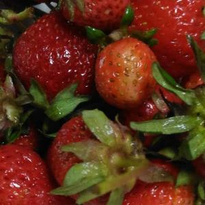 Today's Harvest ( Strawberry - 46 ) / [ May. 2020 ]