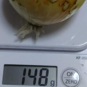 Today's Harvest (Onion) [ May. 2020 ] - 4